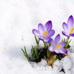 Bulletin de Liaison – Février 2021